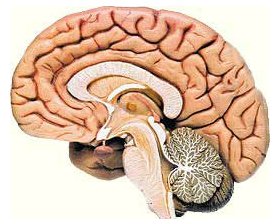 脑梗死多久恢复正常